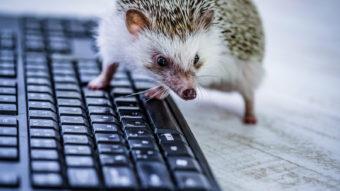 パソコンを触るハリネズミの画像